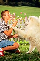 boy with Samoyed dog