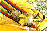 tabby domestic cat _ lying in deck chair
