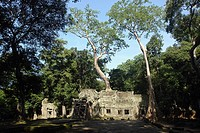 Old ruins of temple surrounded by trees, Ta Prohm, Cambodia