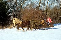 two Black forest horses pulling sled with woman and man