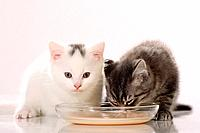 two kittens in front of cup
