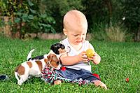 small boy with two Jack Russell Terrier puppies on meadow