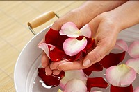 Woman holding rose petals in palms of hands (thumbnail)