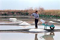 salt harvest France
