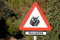Road sign warning of Iberian Lynx (Lynx pardinus) crossing. Sierra Morena, Andalucia, Spain