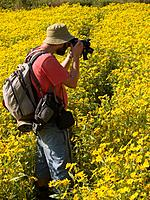 Photographer in flower fields in Myanmar