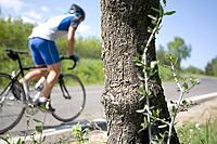 Cyclist cycling on road with tree bark in the foreground (thumbnail)