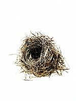 Birds nest on white background