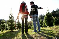 Young couple looking at Christmas trees