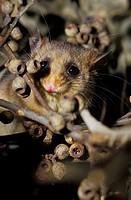 Healesville Sanctuary, Victoria, Australia.