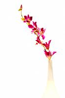 Orchid in vase on white background