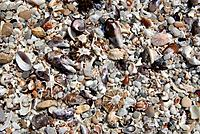 Seashells on the seashore. Photographed at De Hoop Nature Reserve, South Africa.