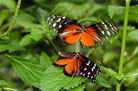 Victoria Butterfly Gardens, Victoria, British Columbia, Canada