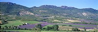 France, Provence, Luberon, lavender field