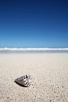 Single seashell on beach, close_up