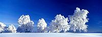 Snow covered landscape, Black Forest, Germany