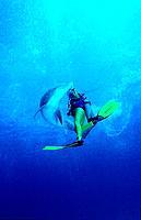 Grosser Tuemmler und Taucher, Delfin, Delphin, bottl, bottlenose dolphin and scuba diver, Tursiops truncatus