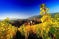 View from the Vineyards over Riquewihr, Elsass, France