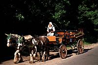 Horse drawn carriage with woman in traditional dress, Prerow, Darss, Mecklenburg_Western Pomerania, Germany