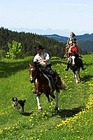 Three horse riders trotting through a meadow with a dog, Muehlviertel, Upper Austria, Austria