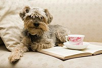 Cute dog with tea and a book