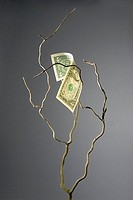 One dollar bill on a branch