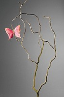 Pink butterfly on a dead branch