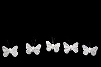 Five white butterflies in a row