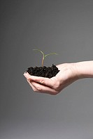 Person holding soil and a sapling