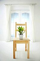 Potted plant on a wooden chair