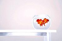 Goldfishes in bowl on table