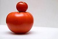 Little tomato on top of big tomato