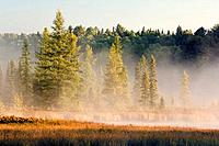 Wetlands at sunrise  Balsam fir, tamarack and Eastern white pine trees  Autumn  Algonquin Provincial Park, Ontario