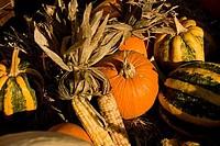High angle view of pumpkins and corns