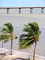 sao luis do maranhao wind blowing on the palm trees
