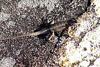 a small lizard gecko animal on floor