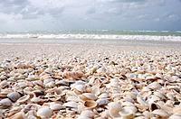 Mexico, Holbox Island, seashells covering white sand beach