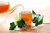 Ivy Tea Hedera helix