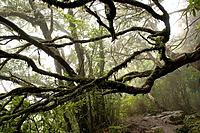 Portugal, Madeira, Misty forest