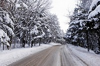 Snow covered tree by road, close_up