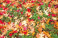 Close_up fall leaves