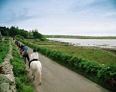 Pony Trekking, Connemara, Ireland