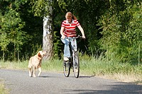 young woman riding a bike _ Labrador Retriever running beside