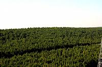 Florest, Paraná, Brazil