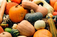 Assorted squashes and pumpkins
