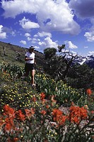 A woman trail running on the Pacific Crest Trail