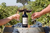 Couple toasting wine glasses, Clayhouse vineyard, Paso Robles, California, USA