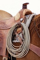 Close up of the rope and saddlle on a horse, Shell, Wyoming