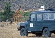 Out_of_focus woman photographing Reticulated giraffe Giraffa camelopardalis in front of Land rover KENYA Samburu
