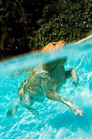 Above and under water image of a swimming dog